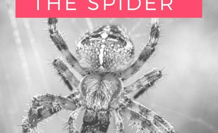 Excorcise the Spider…